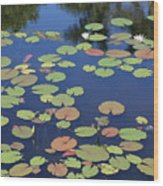Lily Pads On Blue Pond Wood Print