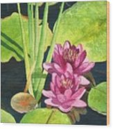 Lily Pads Wood Print
