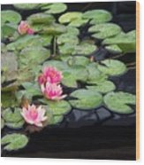 Lily Pond Monet Wood Print