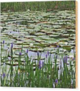 Lily Pond Panorama Wood Print