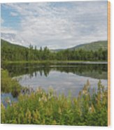 Lily Pond - White Mountains, New Hampshire Wood Print