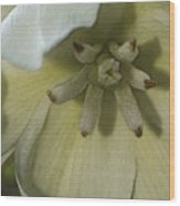 Lily Poster Wood Print