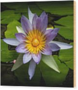 Lily Queen Of The Pond  Wood Print