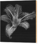 Lily Raindrops In Giverny, France, Black And White Wood Print