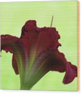 Lily Red On Green Wood Print