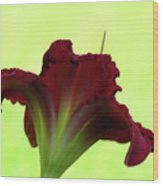 Lily Red On Yellow Green - Daylily Wood Print
