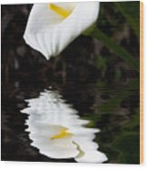 Lily Reflection Wood Print