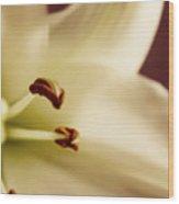 Lily Series 1 Wood Print