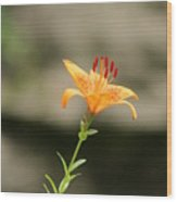 Lily Stands Alone Wood Print