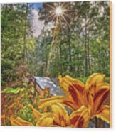 Lily Trail Wood Print