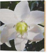 Lily White Wood Print