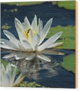 Lily With Bee Wood Print