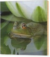 Lilyfrog - Frog With Water Lily Wood Print