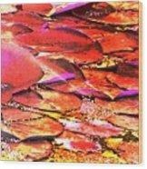 Crimson Lilypads Floating.. Wood Print