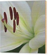 Lilywhite Wood Print