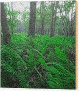 Limberlost IIi Wood Print
