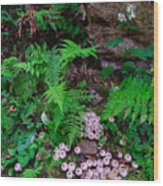 Limberlost Wood Print
