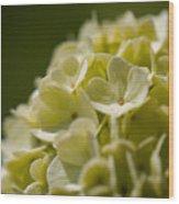 Lime Hydrangea Wood Print