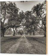 Limerick Plantation Live Oaks Wood Print
