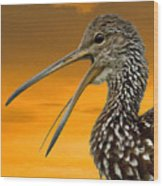 Limpkin At Sunset Wood Print