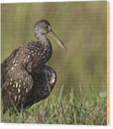 Limpkin Stretching In The Grass Wood Print