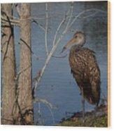 Limpkin  Wood Print