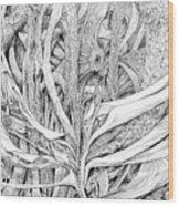 Line 7 Wood Print