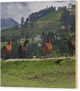 Line-dancing Llamas At Ingapirca Wood Print