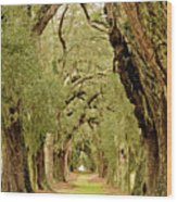 Line Of Oak Trees To Distance Wood Print