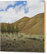 Line Of Trees At Painted Hills Wood Print