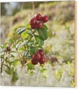 Lingonberries 1 Wood Print