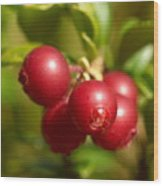 Lingonberry Wood Print