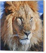 Lion 09 Wood Print