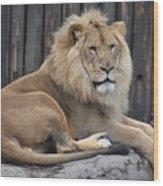 Lion 2 Wood Print