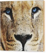 Lion Art - Blue Eyed King Wood Print by Sharon Cummings