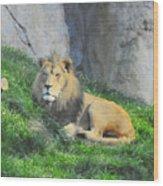 Lion At Leisure Wood Print