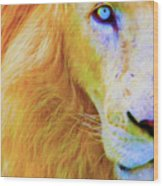 Lion Blue By Nicholas Nixo Efthimiou Wood Print
