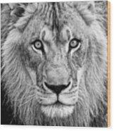 Lion Bw Wood Print