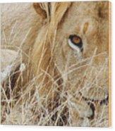 Lion Considering Irish Tartare Wood Print