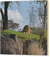 Lion Country Wood Print