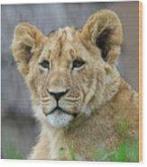 Lion Cub Close Up Wood Print