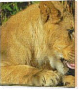Lion Cub - What A Yummy Snack Wood Print