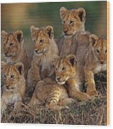 Lion Cubs Wood Print
