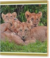 Lion Cubs. L A With Decorative Ornate Printed Frame. Wood Print