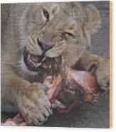 Lion Eating Wood Print