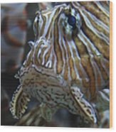 Lion Fish Profile Wood Print