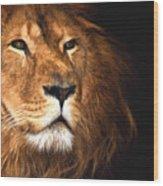 Lion Head Oil Painting Wood Print