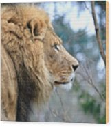 Lion In Thought Wood Print