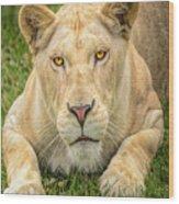 Lion Nature Wear Wood Print