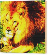 Lion Of Judah Wood Print